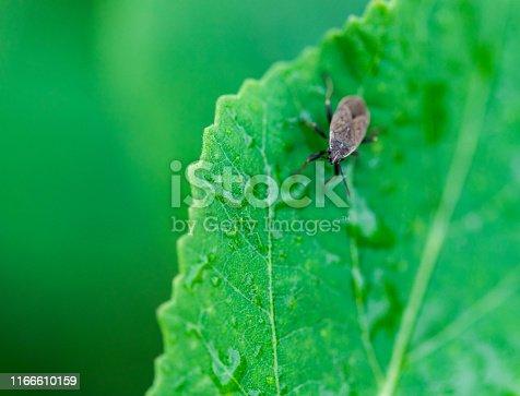 Insect macro close-up