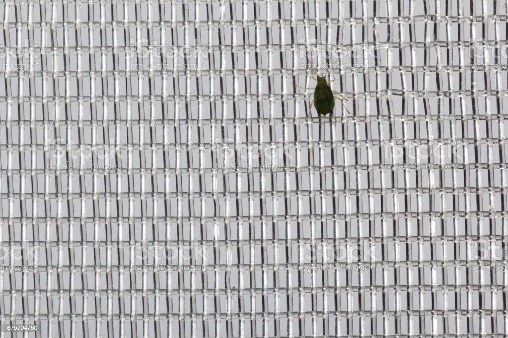 昆蟲的網格 免版稅 stock photo