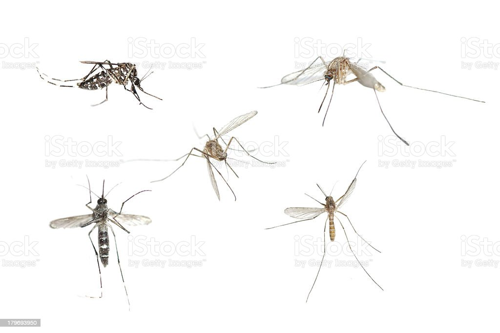 insect mosquito bug set stock photo