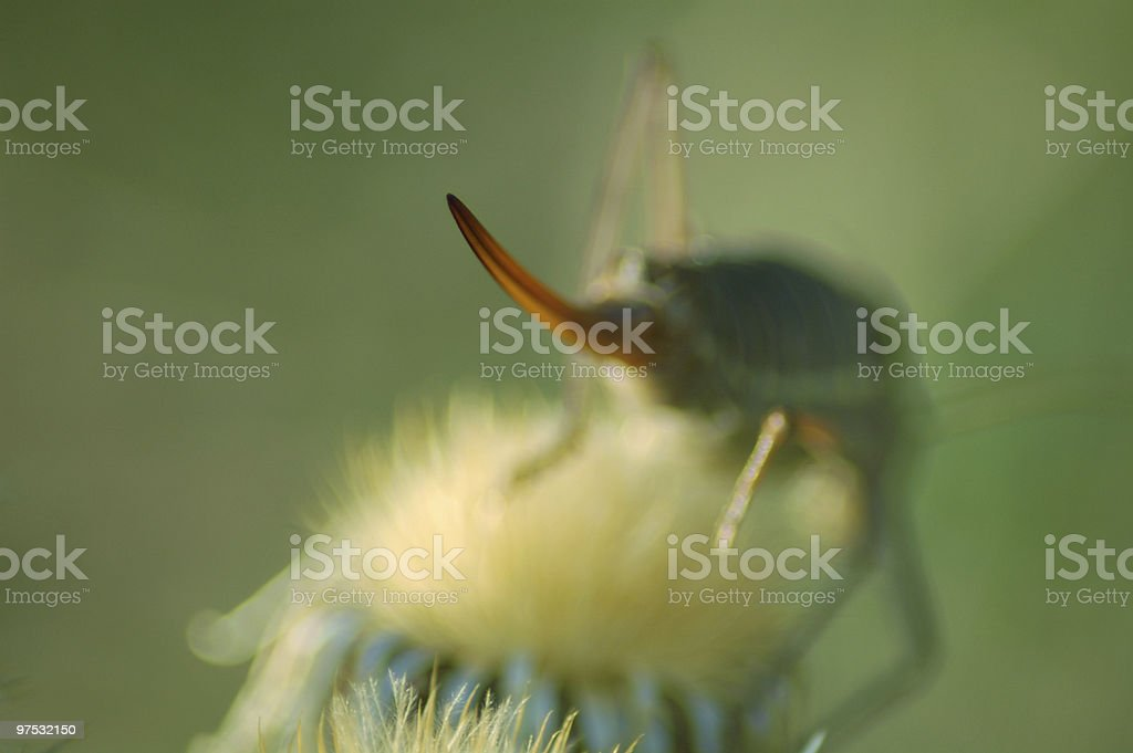 Insect Needle royalty-free stock photo