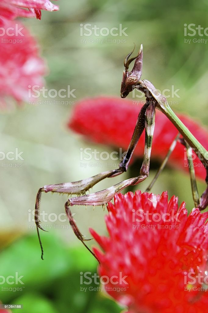 Insect on a flower stock photo