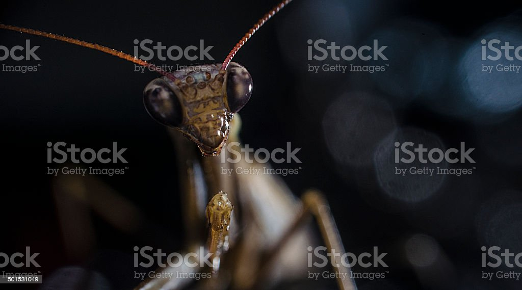 insect on black background stock photo