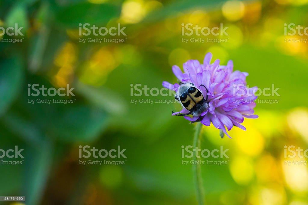 Insect On Flower bildbanksfoto