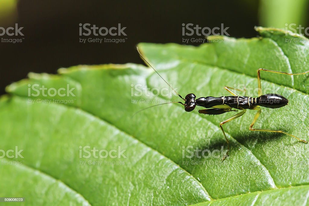 Insect on green leaf stock photo
