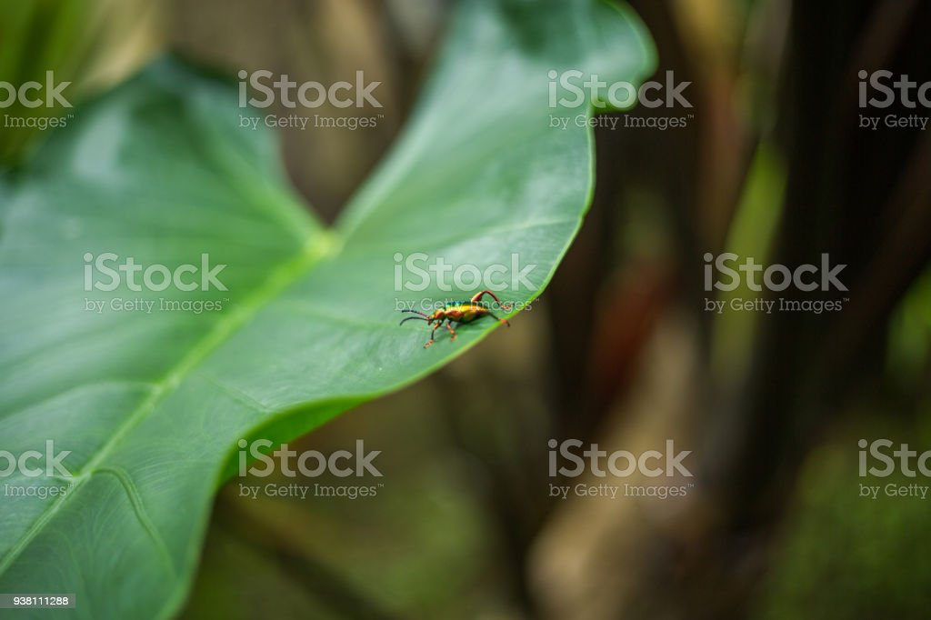 Insect On Leaf Macro Shot Indonesia Asia Stock Photo & More Pictures ...