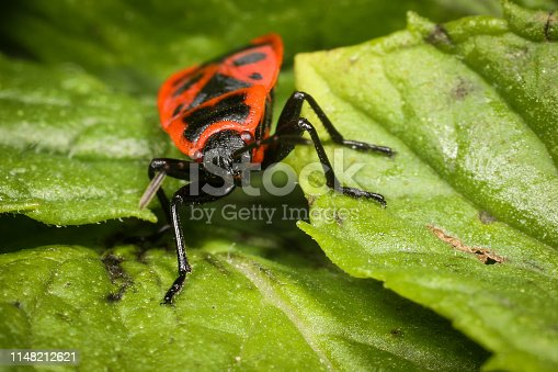 1054407300istockphoto Insect on nature with close-up 1148212621