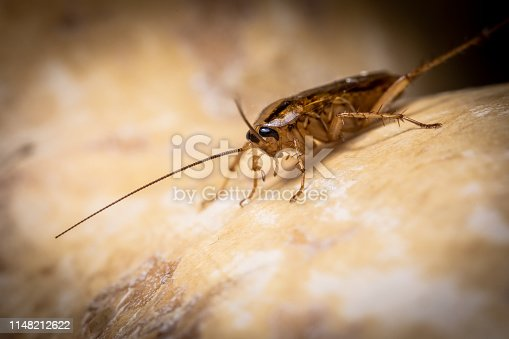 1054407300istockphoto Insect on nature with close-up 1148212622