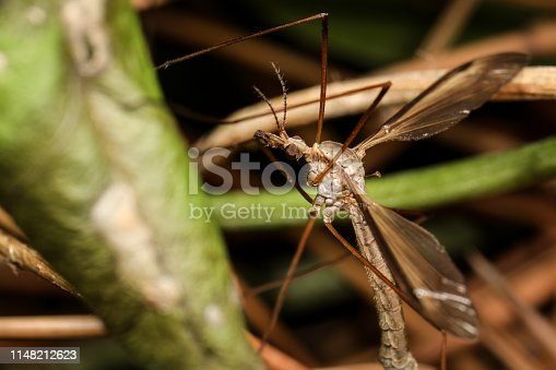 1054407300istockphoto Insect on nature with close-up 1148212623
