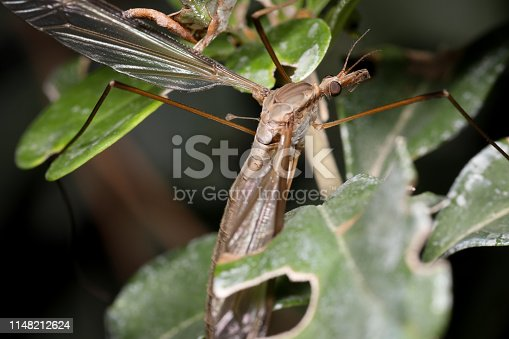 1054407300istockphoto Insect on nature with close-up 1148212624