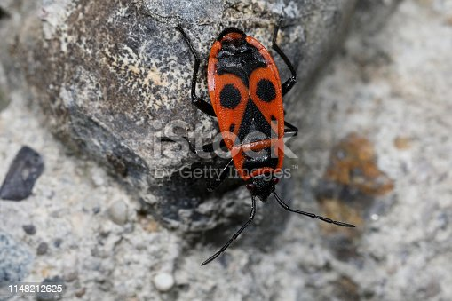1054407300istockphoto Insect on nature with close-up 1148212625