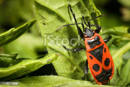 1054407300istockphoto Insect on nature with close-up 1148212636