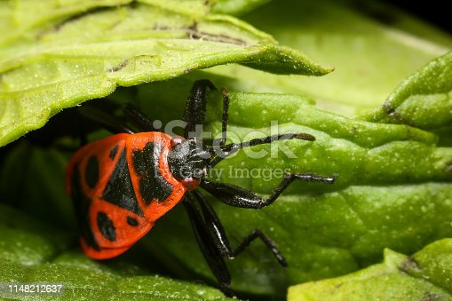 1054407300istockphoto Insect on nature with close-up 1148212637