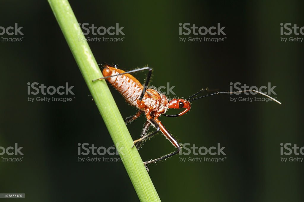 Insect on the green grass royalty-free stock photo