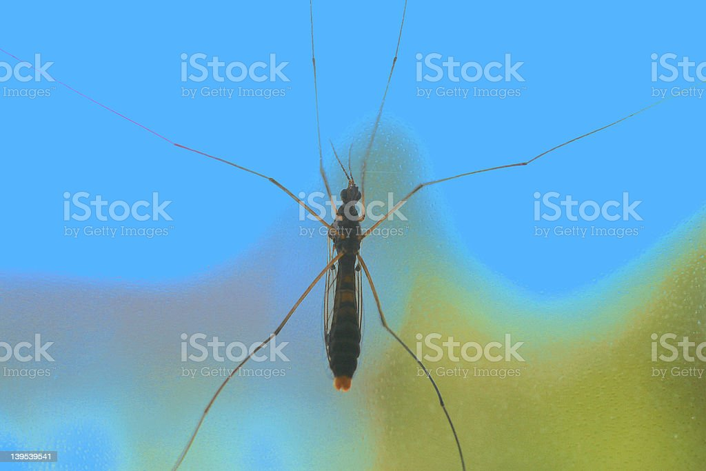 insect pasted on a window stock photo
