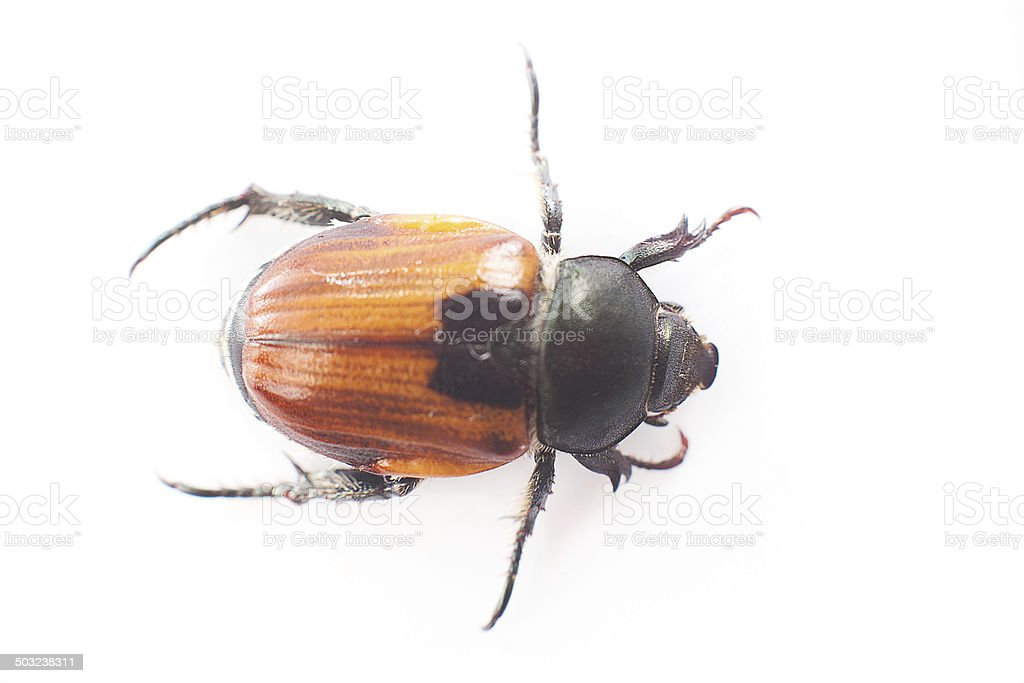 Insect royalty-free stock photo