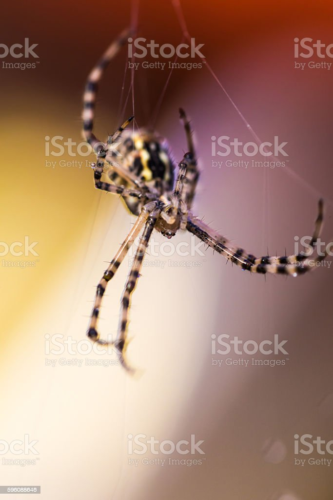 insect spider close-up royalty-free stock photo