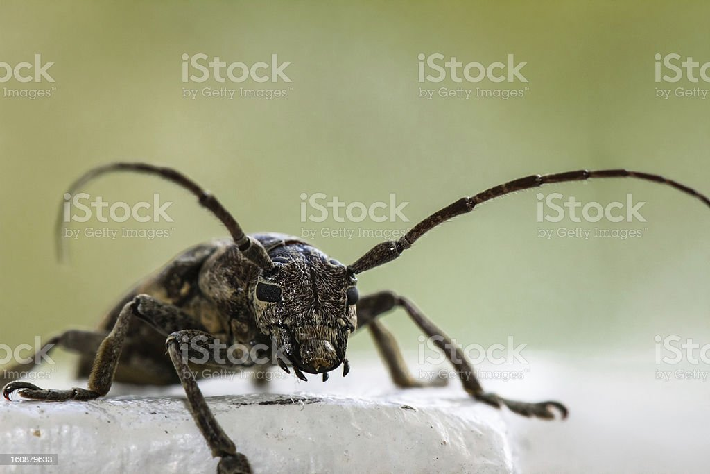 Insect Staring right at you stock photo