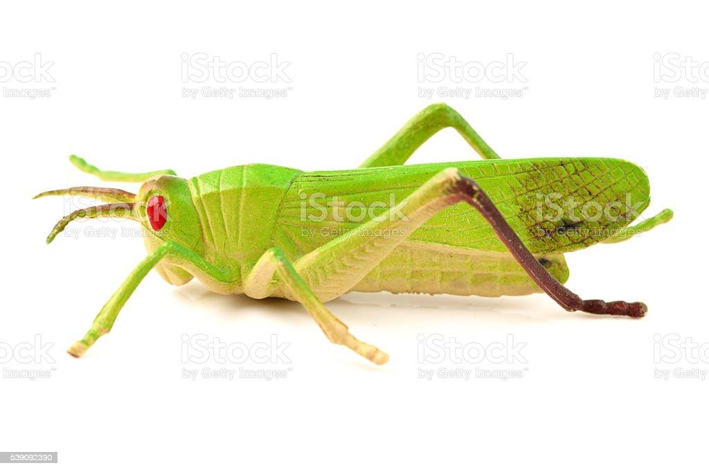 insect studio stock photo
