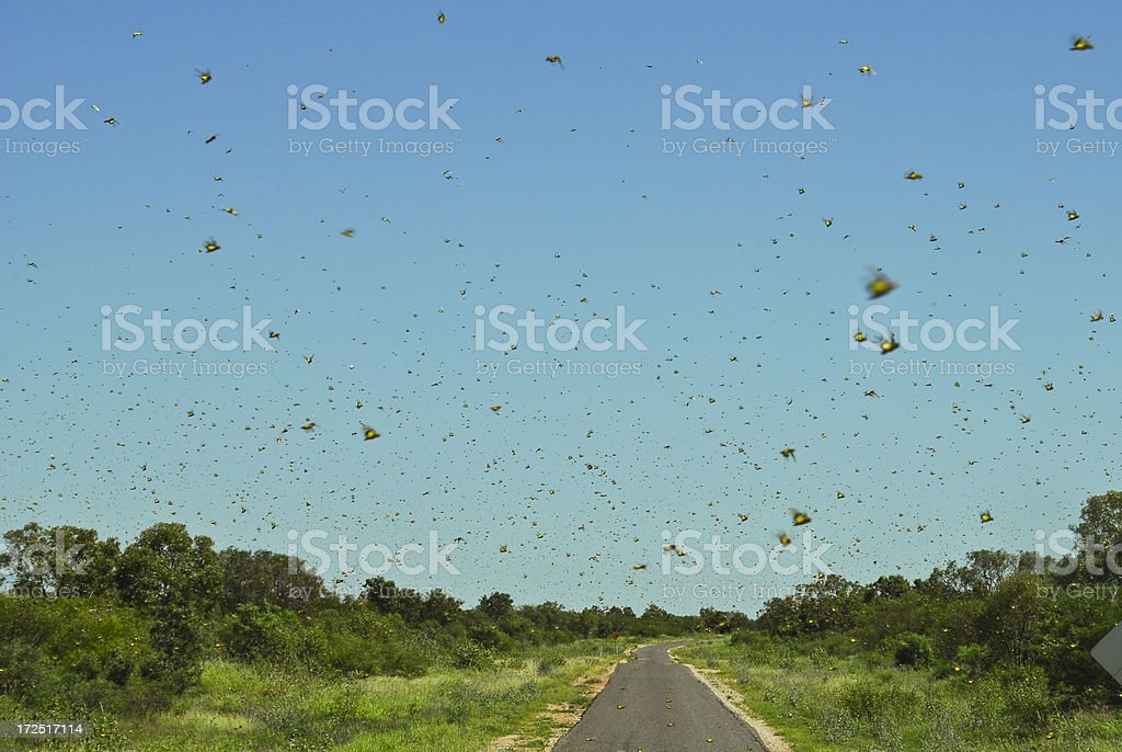 Insect Swarm stock photo