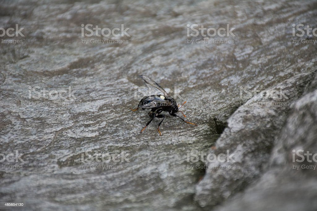 Insect with broken wing stock photo