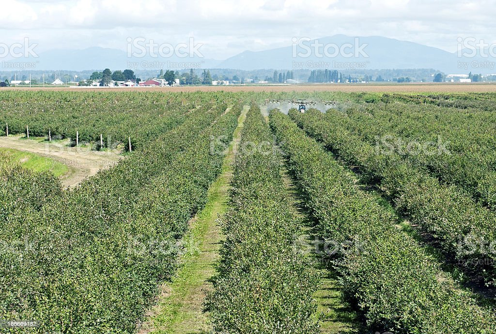 Insecticide being sprayed on blueberries in Skagit Valley WA stock photo