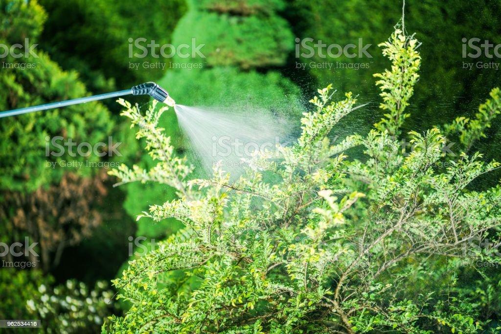 Inseticida no jardim - Foto de stock de Agricultura royalty-free