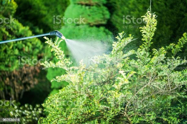 Foto de Inseticida No Jardim e mais fotos de stock de Agricultura