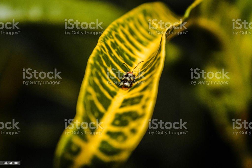 Insecto - foto de stock