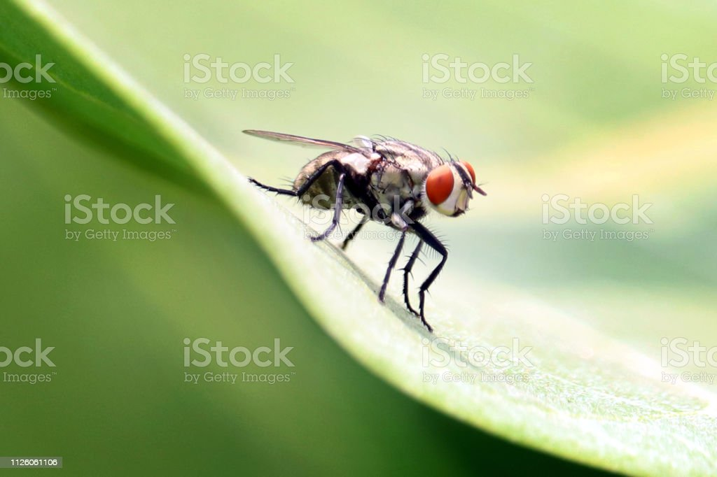 insects and dragonflies stock photo