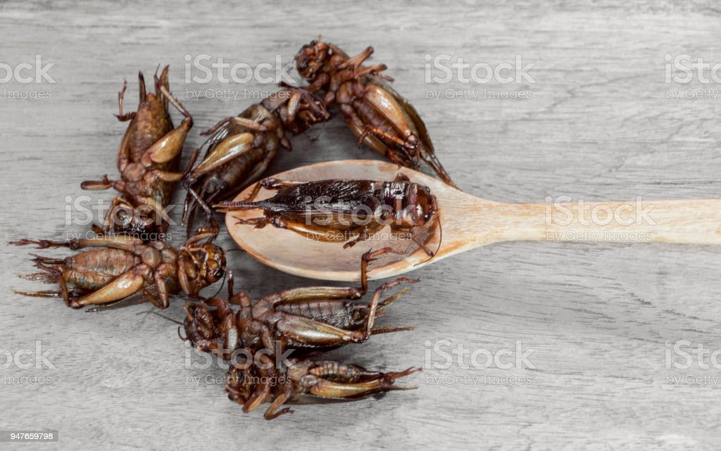 Insects and wooden spoon on the wood table. The concept of protein food sources from insects. stock photo