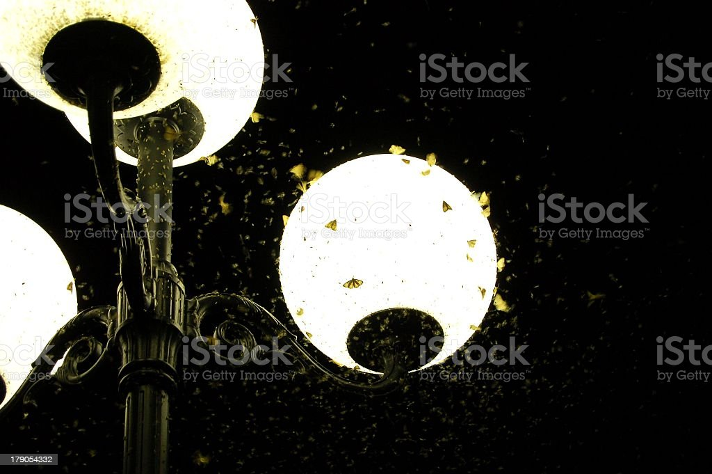 Insects being attracted by light stock photo