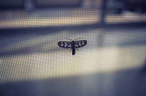 Insects caught in the net Insects caught in the net netting stock pictures, royalty-free photos & images