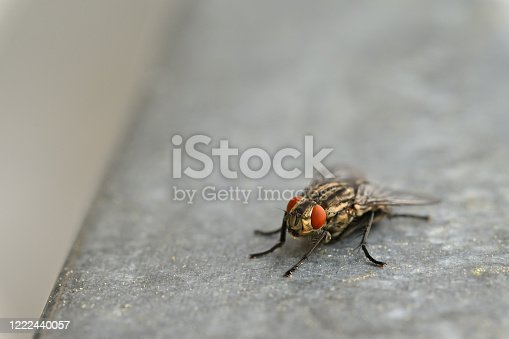 Insects close up. Beautiful macro shot of a fly.
