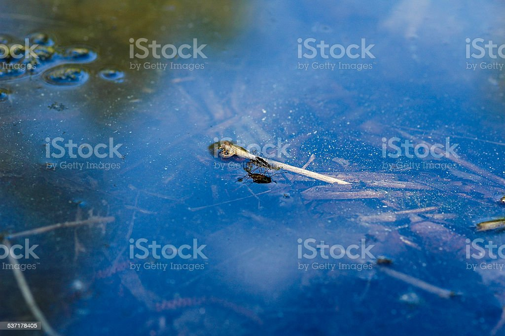 insects coitus on pound stock photo