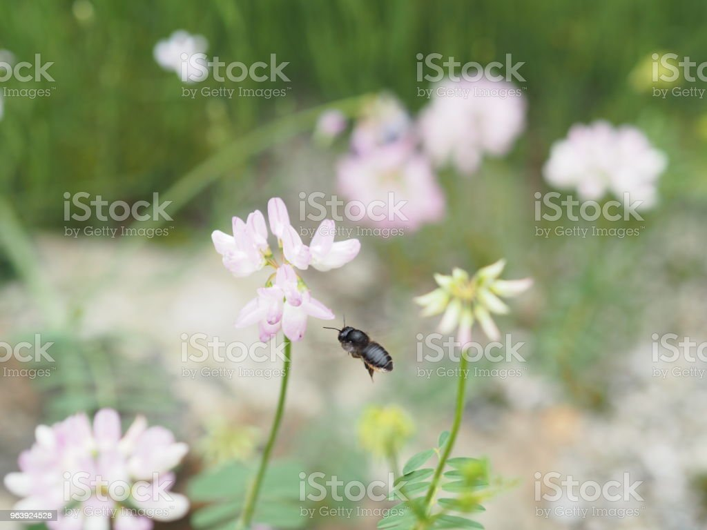 Insects gathering in pink flowers - Royalty-free Advertisement Stock Photo