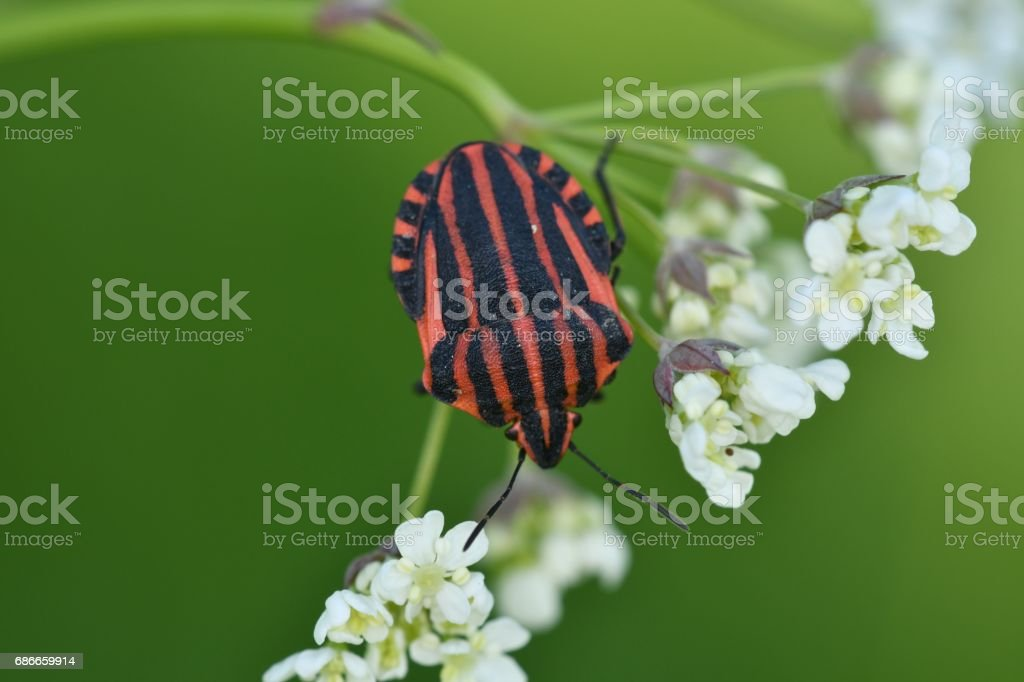 insects in the spring on the meadow royalty-free stock photo