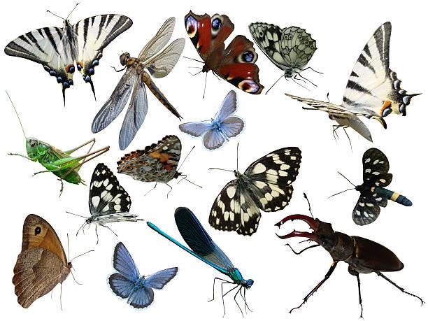Insectos aislado - foto de stock