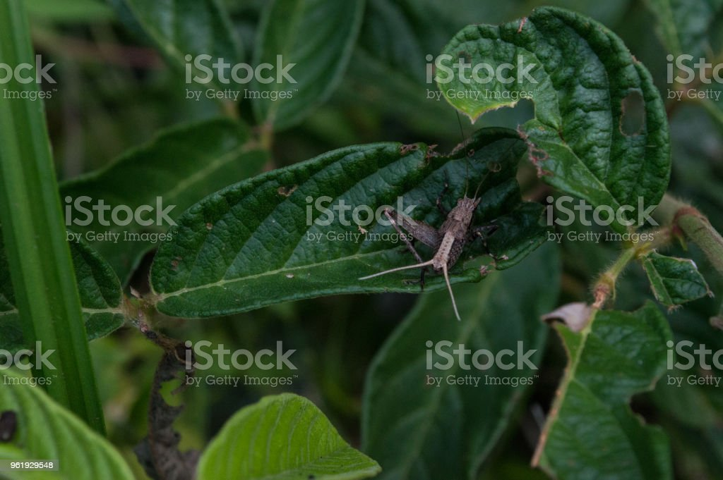 insects life stock photo