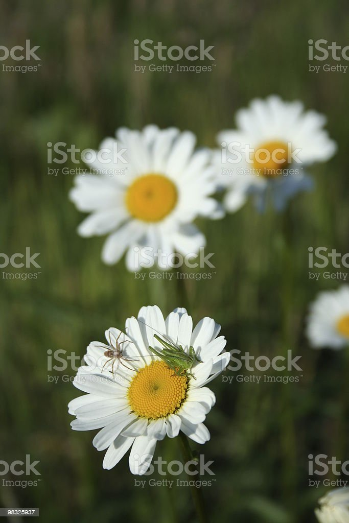 insects on flower royalty-free stock photo