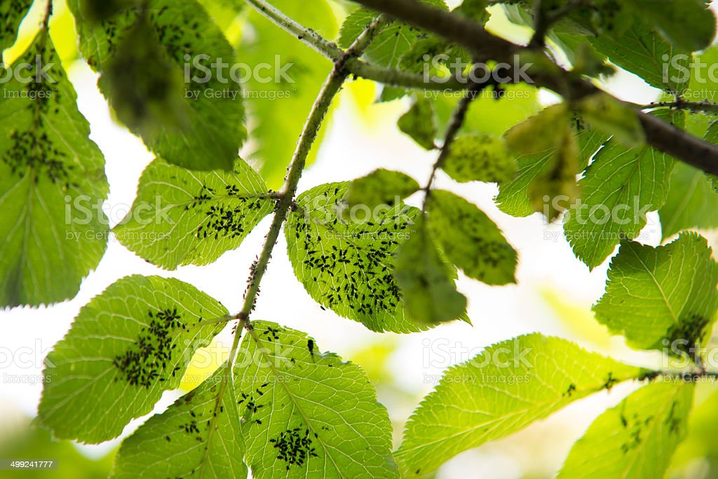 insects on green leaf stock photo