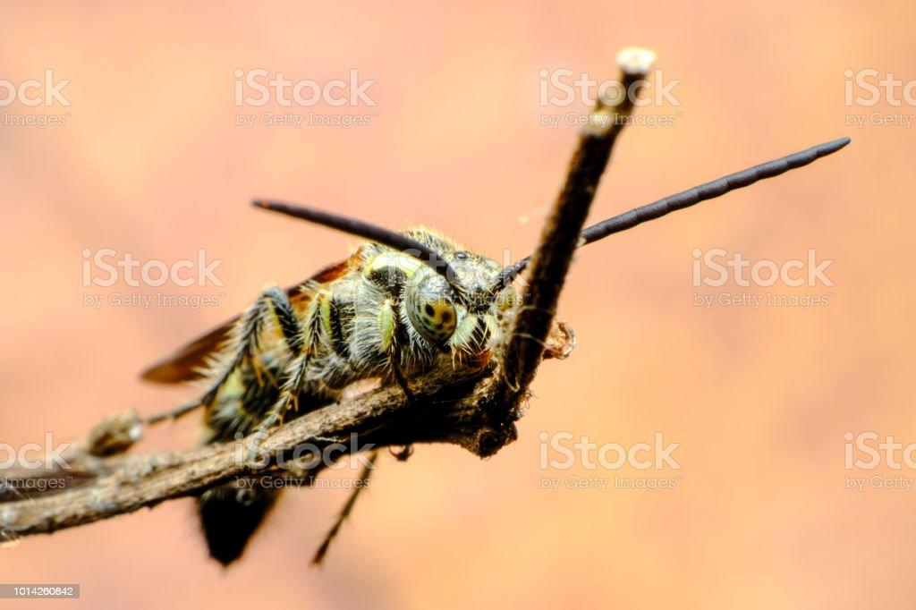 Insectos - foto de stock