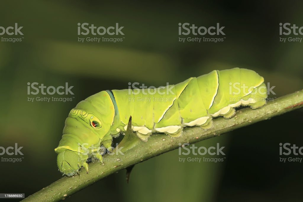 insects royalty-free stock photo