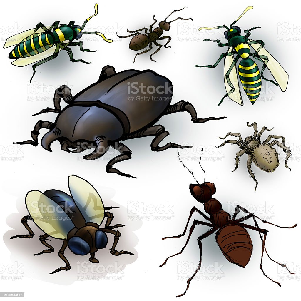 Insectes - Photo