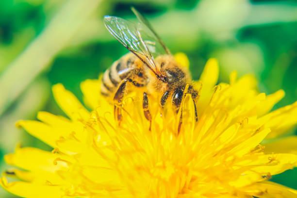 insekten - eierstich stock-fotos und bilder