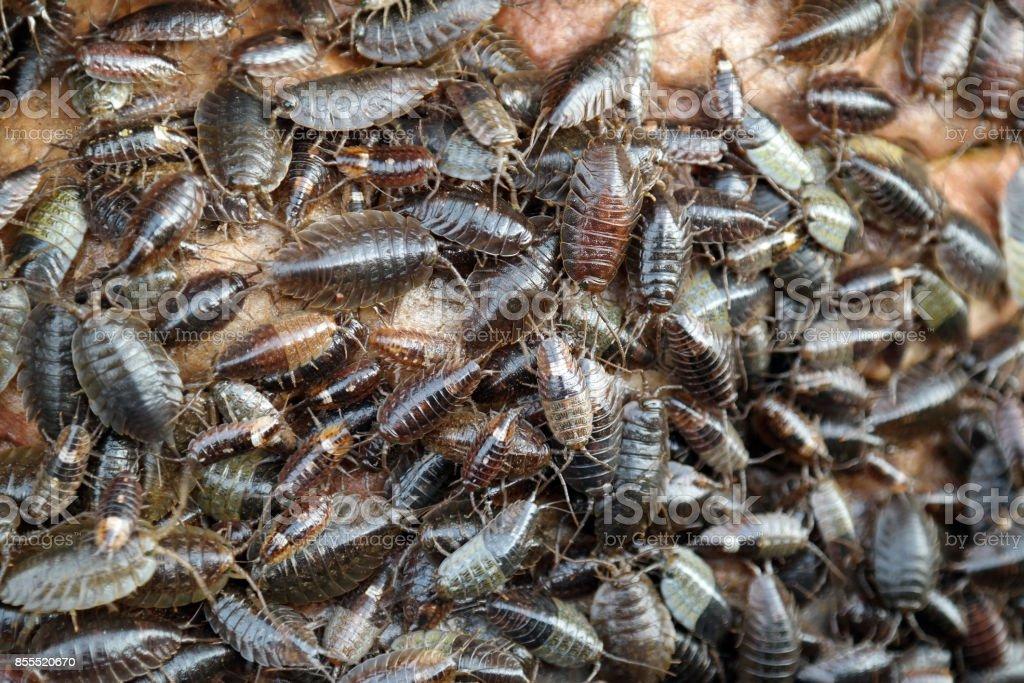 Insects sea lice animals wildlife nature shoreline ocean-floor...