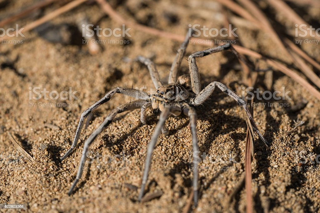 Insects, Spiders ,spiders on the forest,wolf spider on leaf. - foto de acervo