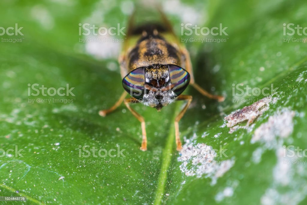 Insects with beautiful natural eyes. Take on the leaf. stock photo