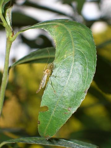 Insekt Mit Flügel Stock Photo - Download Image Now