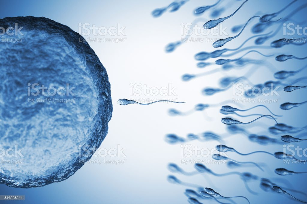 Insemination stock photo