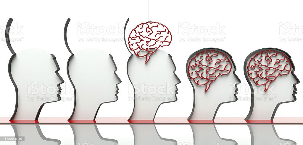 Inserting brains in heads, concept of intelligence stock photo